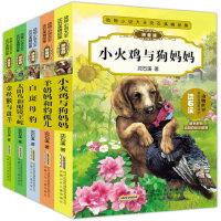 沈石溪动物小说大王全套5册拼音版系列作品太阳鸟和眼镜王蛇小火鸡与狗妈妈*与* 羊奶妈和豹孤儿7-8-10岁儿童读物