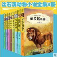 沈石溪动物小说全集全套8册 被放逐的狮王 雪国狼王 忠诚的狮子狗 *传奇 动物小说大王沈石溪系列