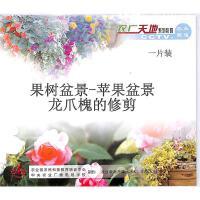 果树盆景-苹果盆景龙爪槐的修剪VCD